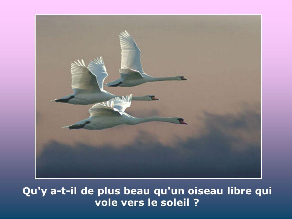 Qu y a-t-il de plus beau qu un oiseau libre qui vole vers le soleil