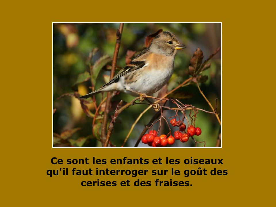 Ce sont les enfants et les oiseaux qu il faut interroger sur le goût des cerises et des fraises.