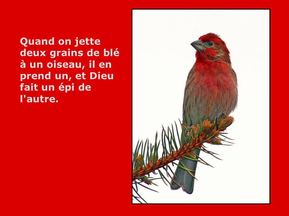 Quand on jette deux grains de blé à un oiseau, il en prend un, et Dieu fait un épi de l autre.
