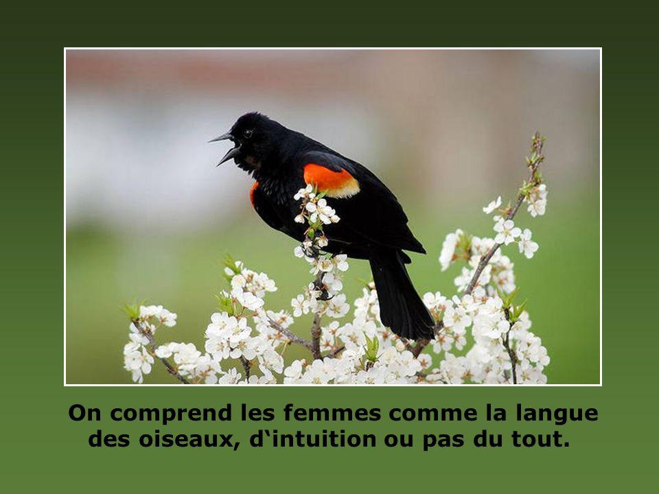 On comprend les femmes comme la langue des oiseaux, d'intuition ou pas du tout.