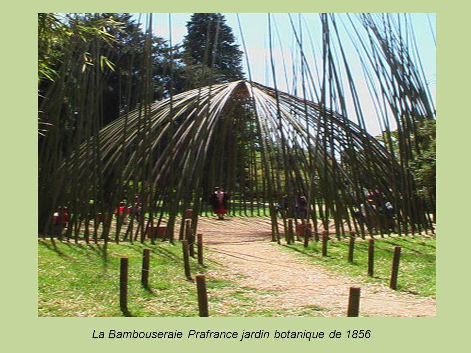 . La Bambouseraie Prafrance jardin botanique de 1856