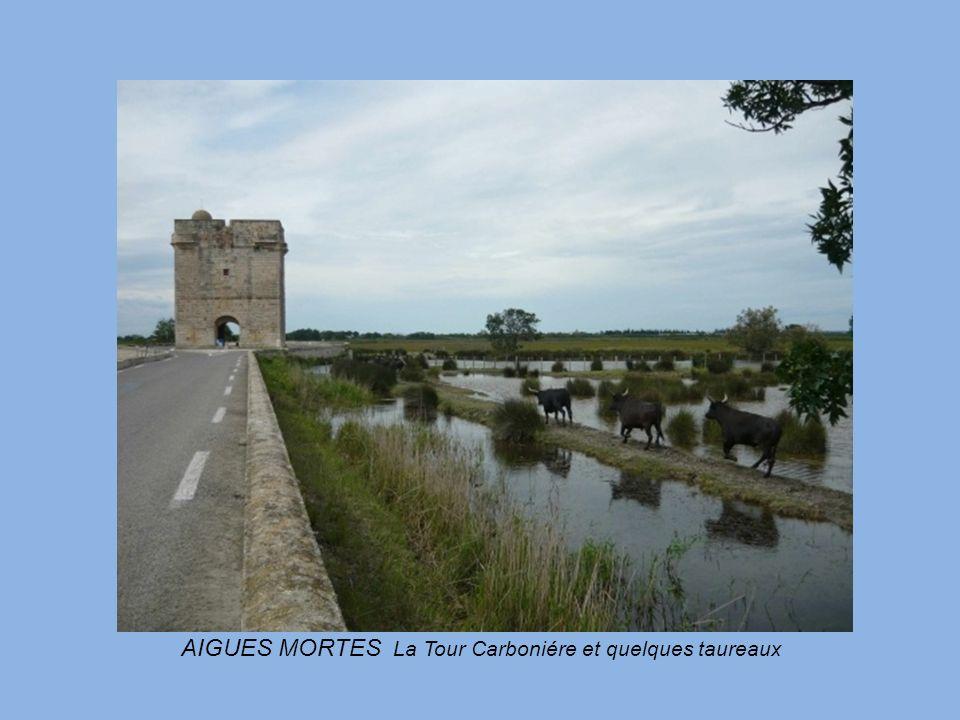 AIGUES MORTES La Tour Carboniére et quelques taureaux