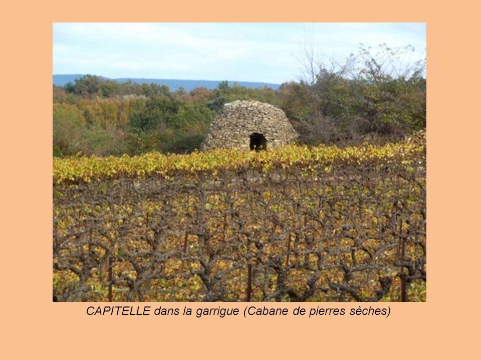 CAPITELLE dans la garrigue (Cabane de pierres sèches)
