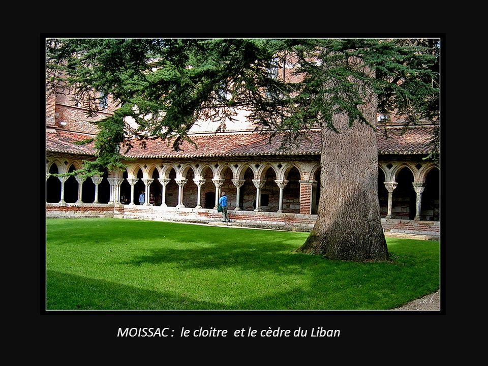 MOISSAC : le cloitre et le cèdre du Liban