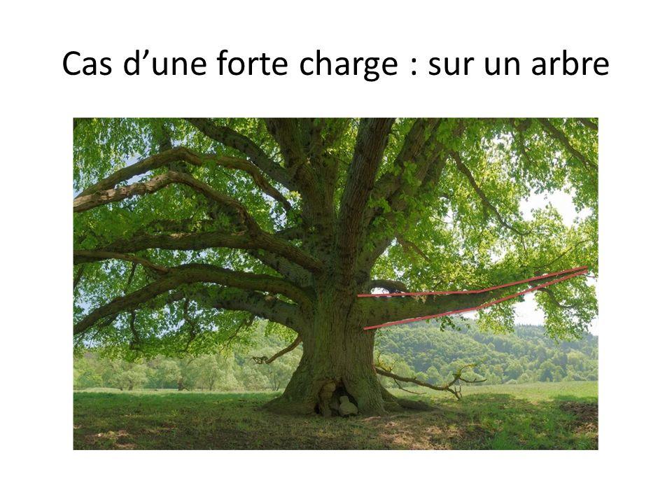 Cas d'une forte charge : sur un arbre