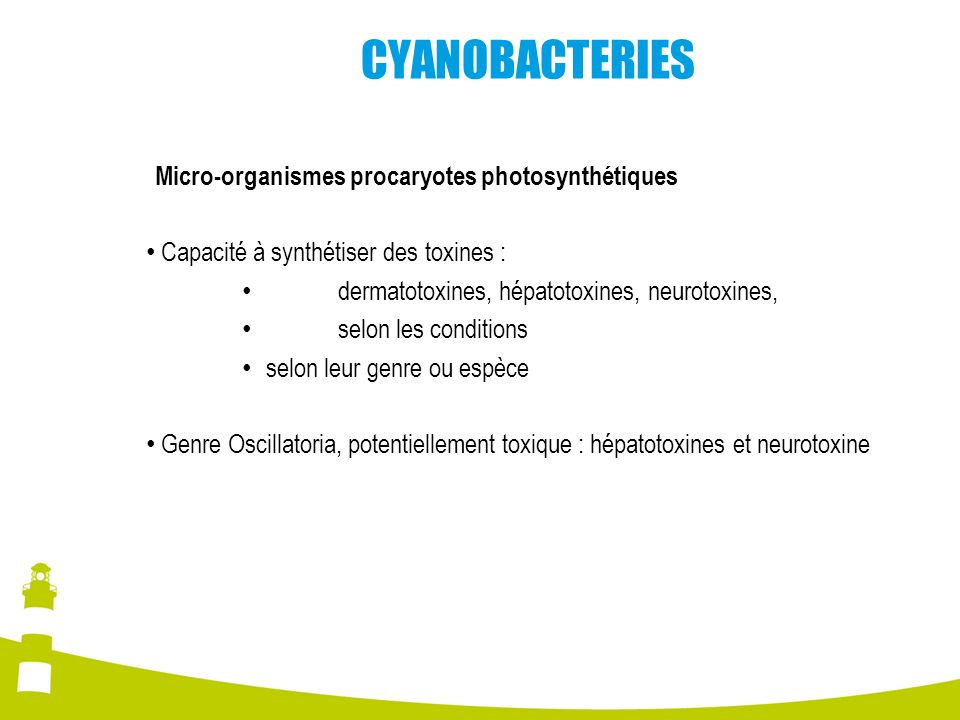 CYANOBACTERIES Micro-organismes procaryotes photosynthétiques