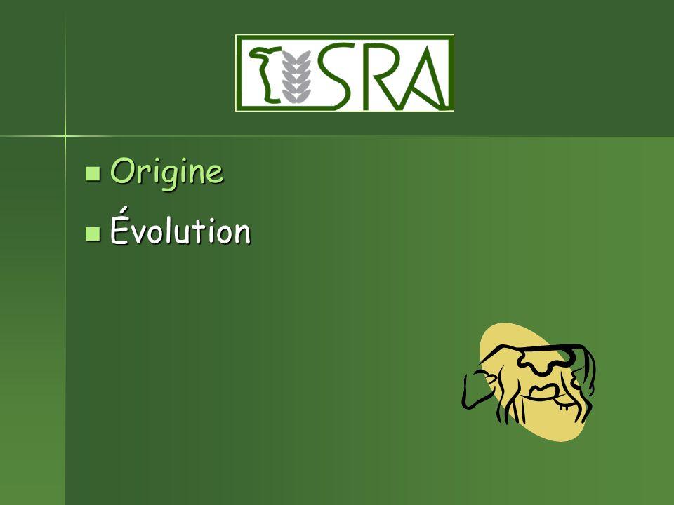 Origine Évolution