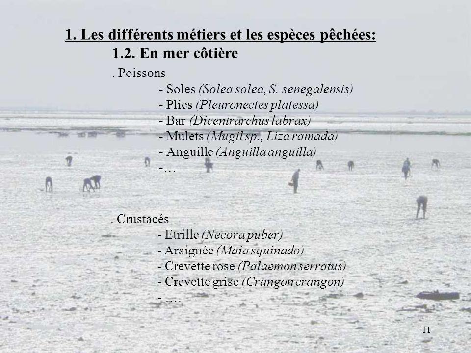 1. Les différents métiers et les espèces pêchées: 1.2. En mer côtière