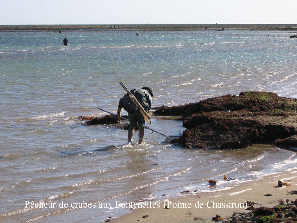 Pêcheur de crabes aux Fontenelles (Pointe de Chassiron)