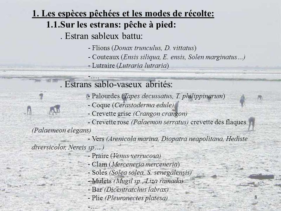 1. Les espèces pêchées et les modes de récolte: