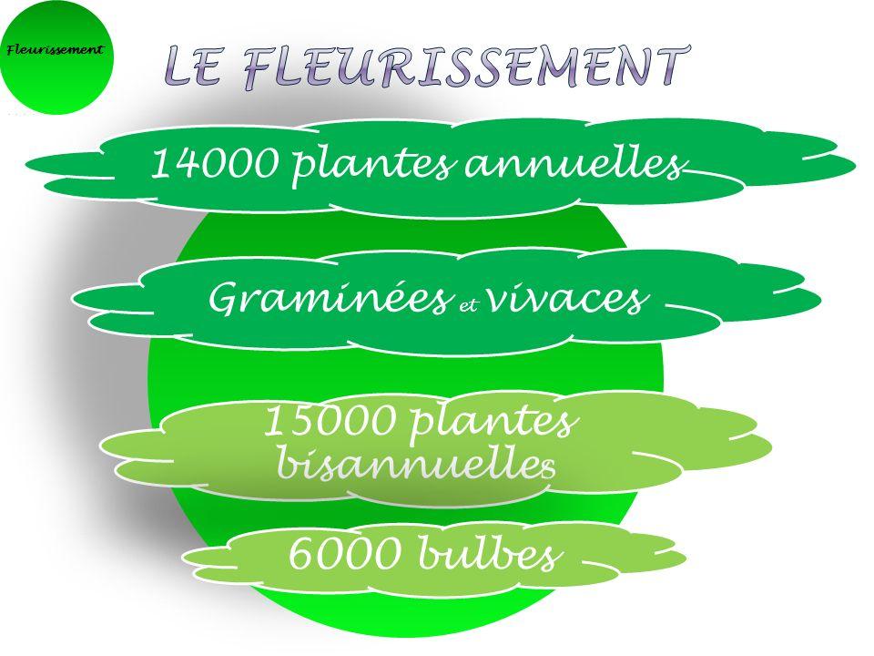 Le fleurissement 6000 bulbes Graminées et vivaces