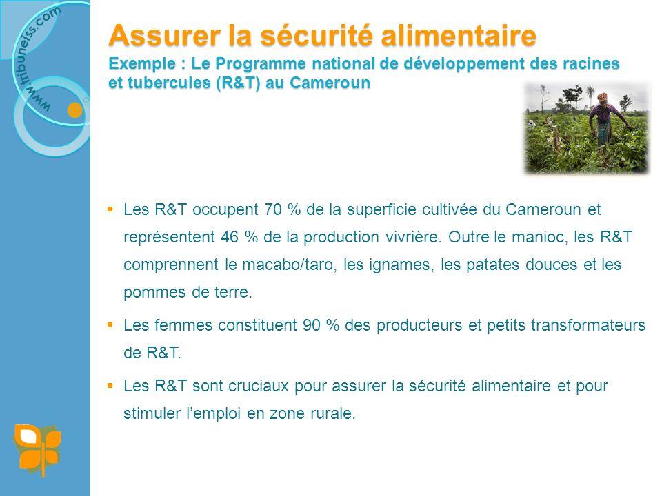 Assurer la sécurité alimentaire Exemple : Le Programme national de développement des racines et tubercules (R&T) au Cameroun (suite)