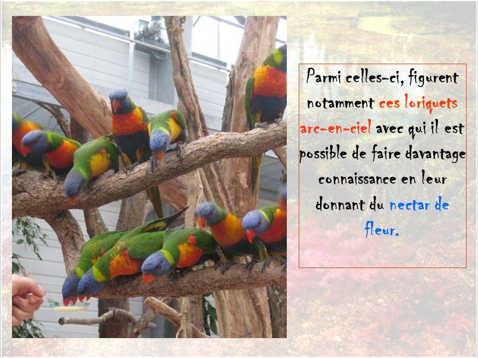 Parmi celles-ci, figurent notamment ces loriquets arc-en-ciel avec qui il est possible de faire davantage connaissance en leur donnant du nectar de fleur.