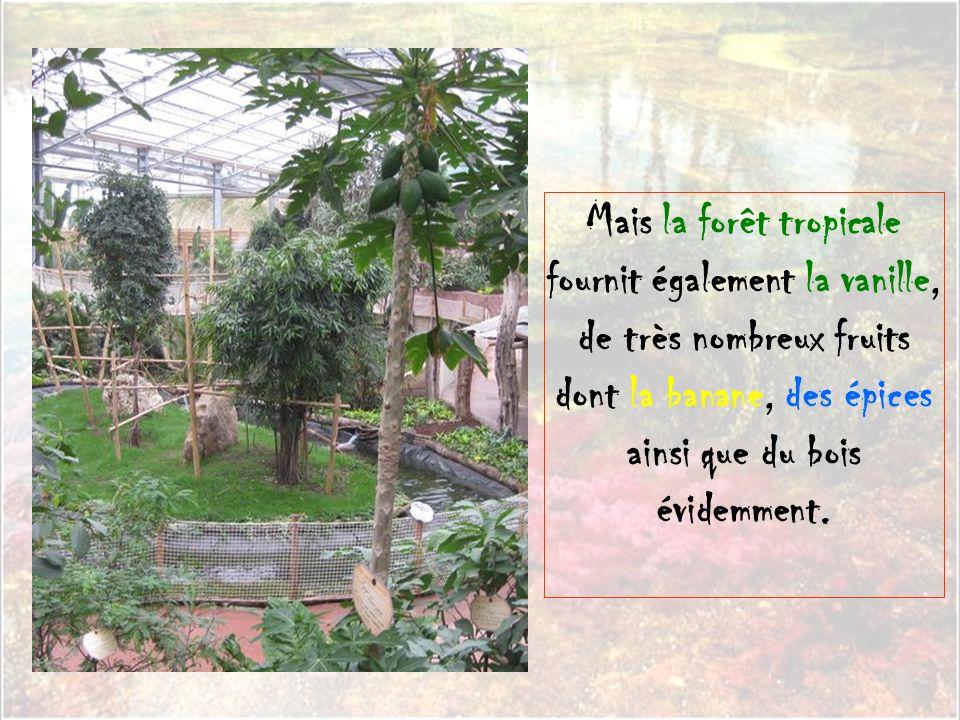 Mais la forêt tropicale fournit également la vanille, de très nombreux fruits dont la banane, des épices ainsi que du bois évidemment.