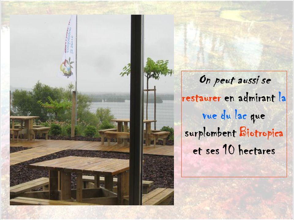On peut aussi se restaurer en admirant la vue du lac que surplombent Biotropica et ses 10 hectares