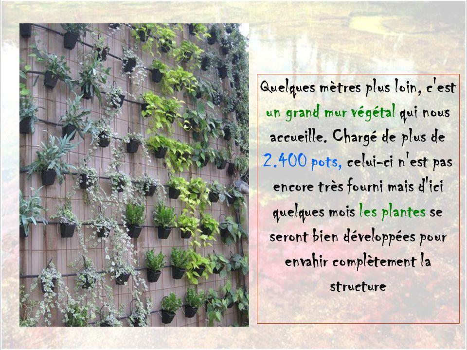 Quelques mètres plus loin, c est un grand mur végétal qui nous accueille.