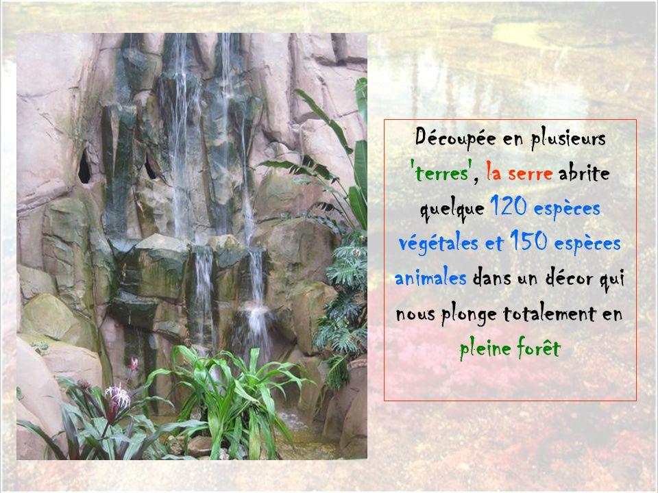 Découpée en plusieurs terres , la serre abrite quelque 120 espèces végétales et 150 espèces animales dans un décor qui nous plonge totalement en pleine forêt