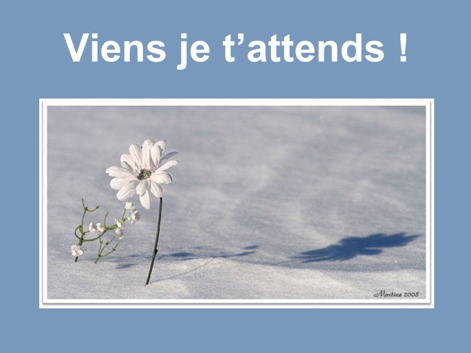 Viens je t'attends !