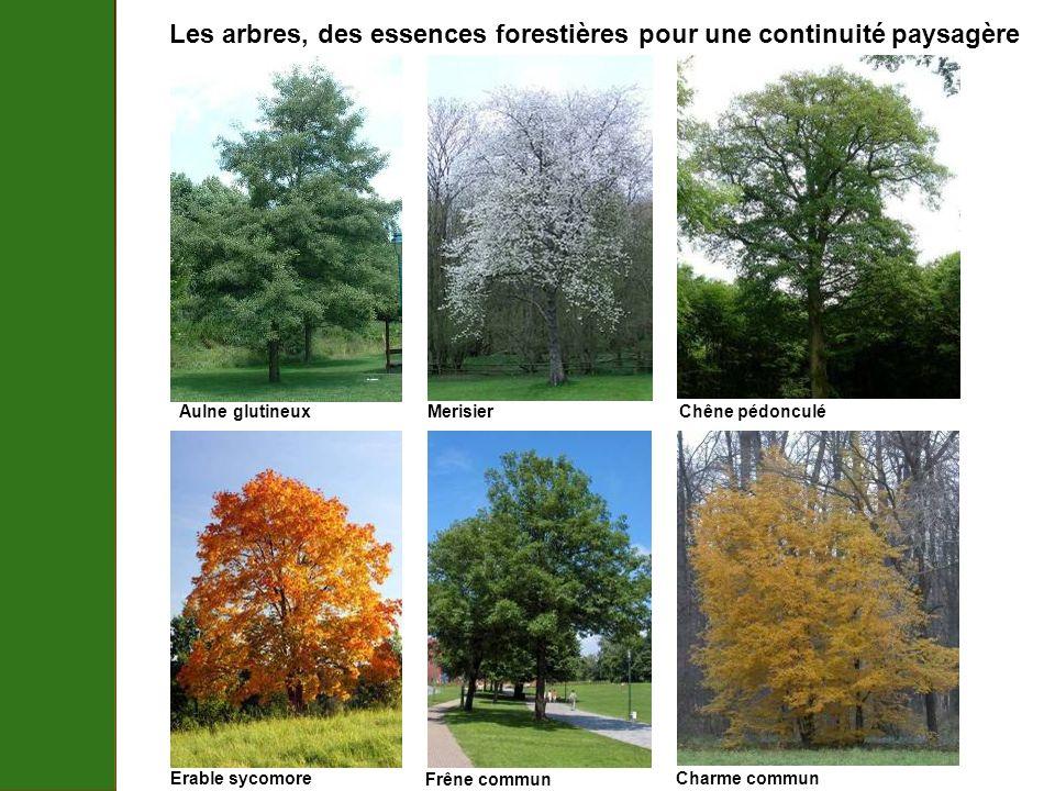 Les arbres, des essences forestières pour une continuité paysagère