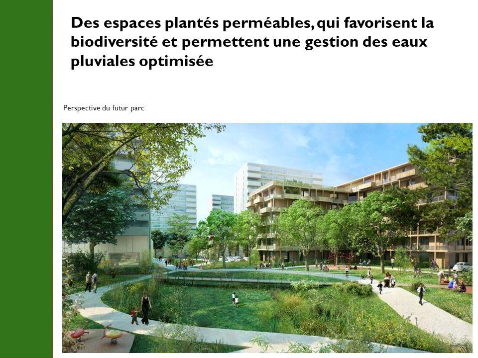 Des espaces plantés perméables, qui favorisent la biodiversité et permettent une gestion des eaux pluviales optimisée