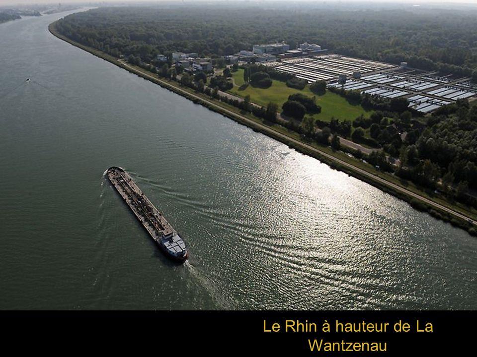 Le Rhin à hauteur de La Wantzenau