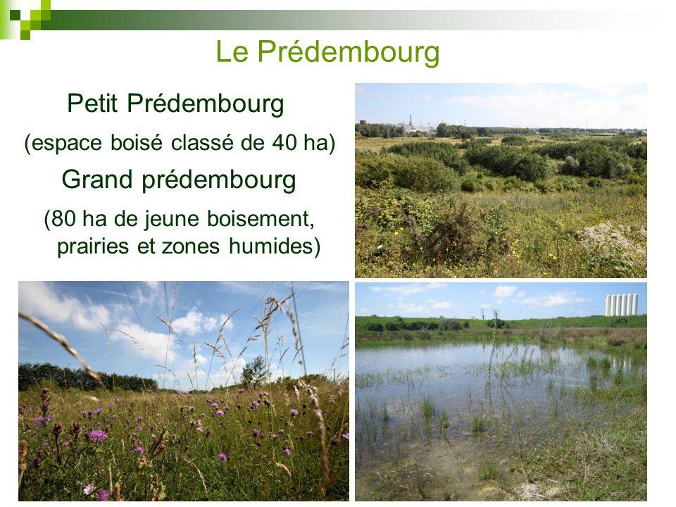 Le Prédembourg Petit Prédembourg (espace boisé classé de 40 ha)