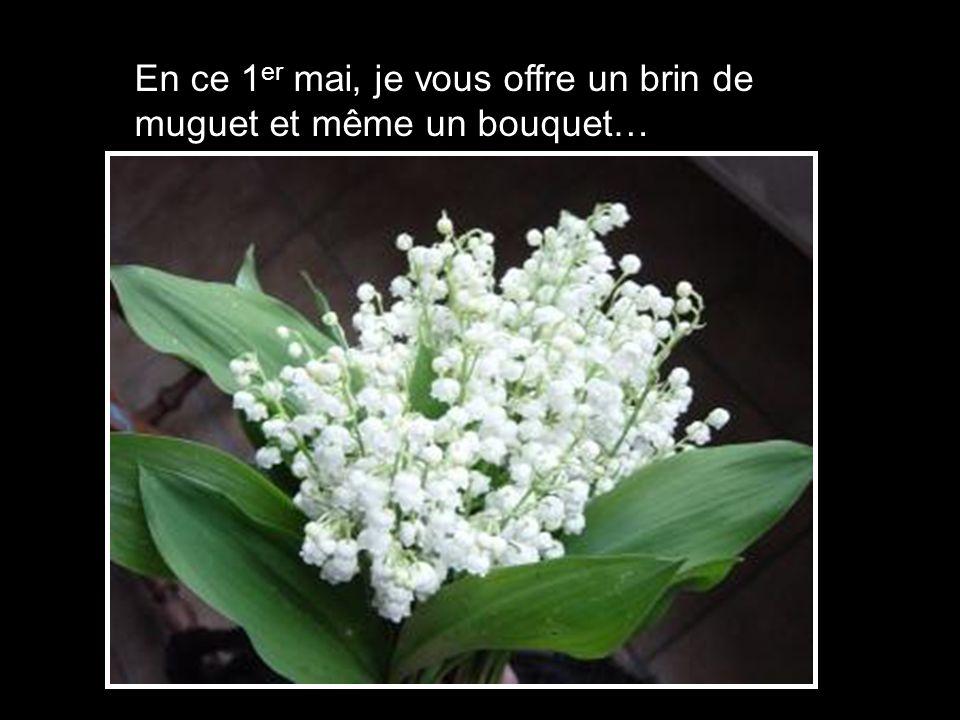 En ce 1er mai, je vous offre un brin de muguet et même un bouquet…