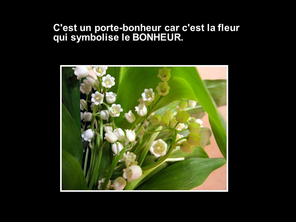 C est un porte-bonheur car c est la fleur qui symbolise le BONHEUR.