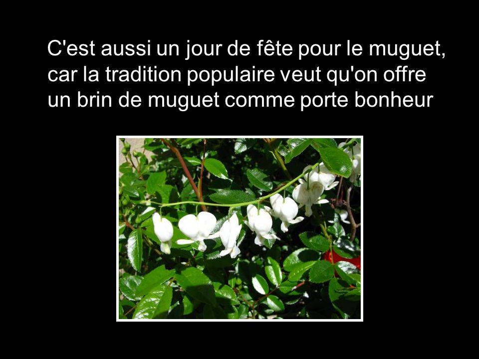 Le muguet a longtemps t le symbole du renouveau et du printemps il tait donc logique qu 39 il - Un brin de muguet porte bonheur ...
