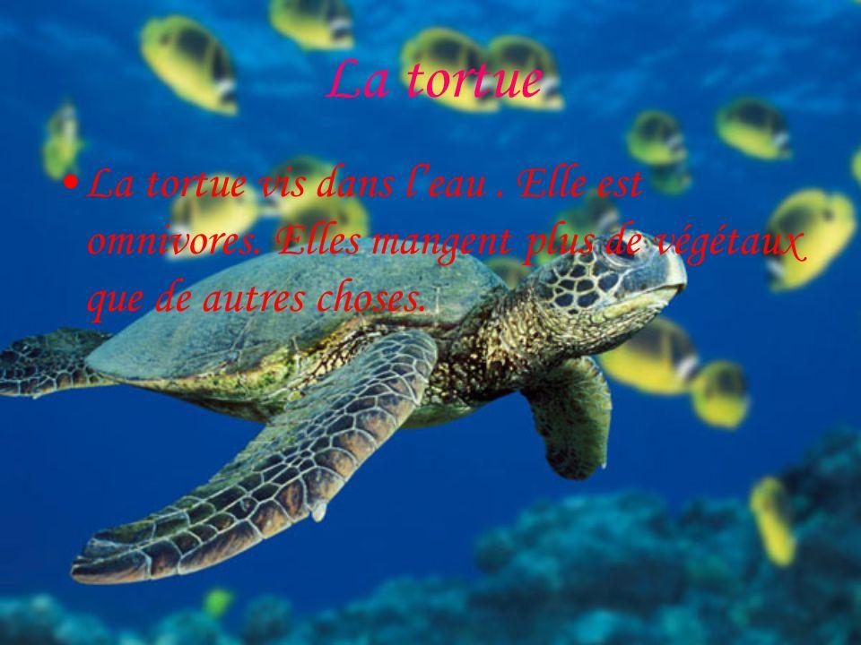 La tortue La tortue vis dans l'eau . Elle est omnivores.