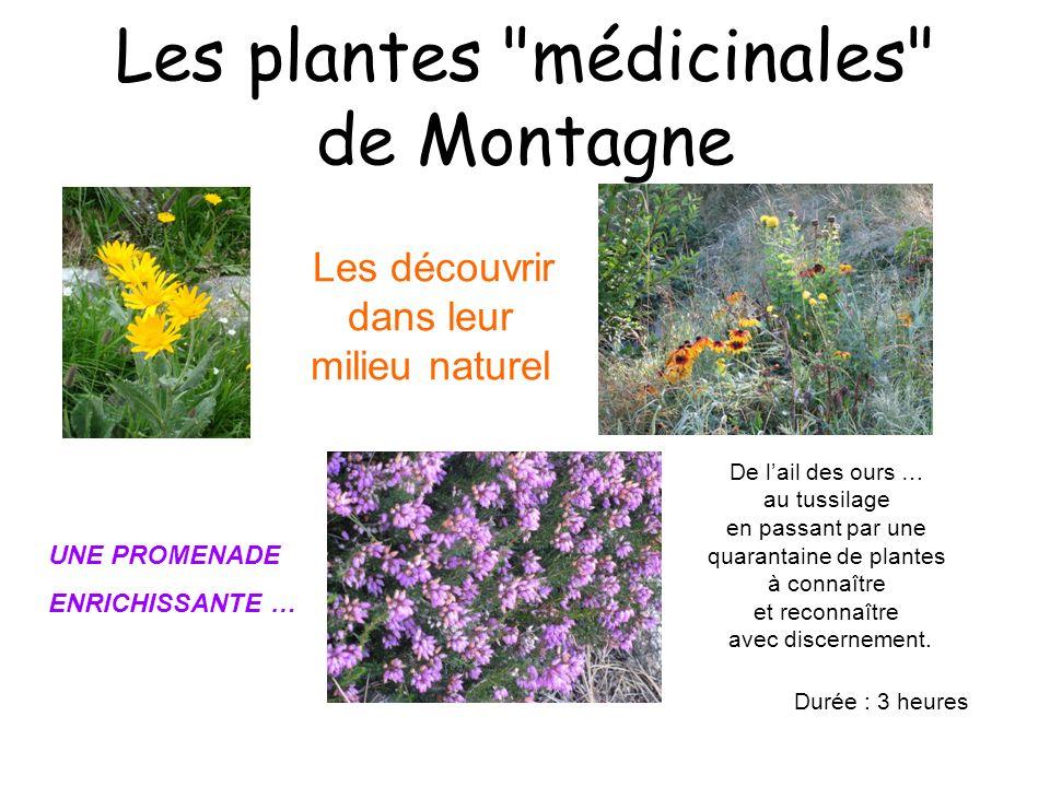 Les plantes médicinales de Montagne