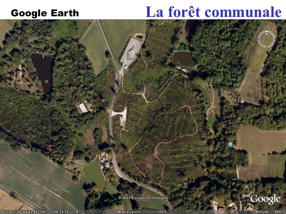 La forêt communale En 199, la forêt a été dévastée …
