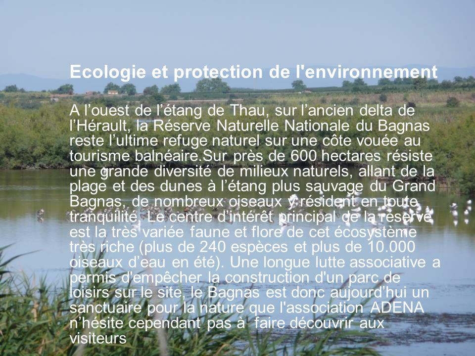 Ecologie et protection de l environnement