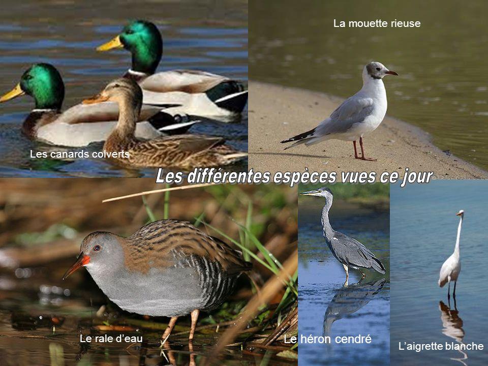 Les différentes espèces vues ce jour