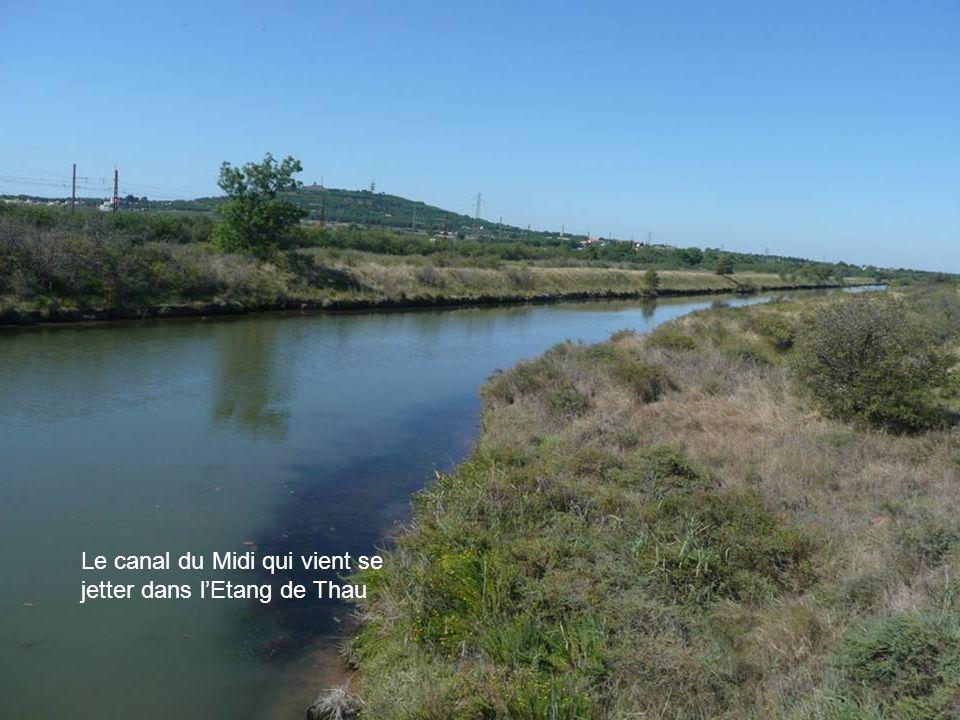 Le canal du Midi qui vient se jetter dans l'Etang de Thau