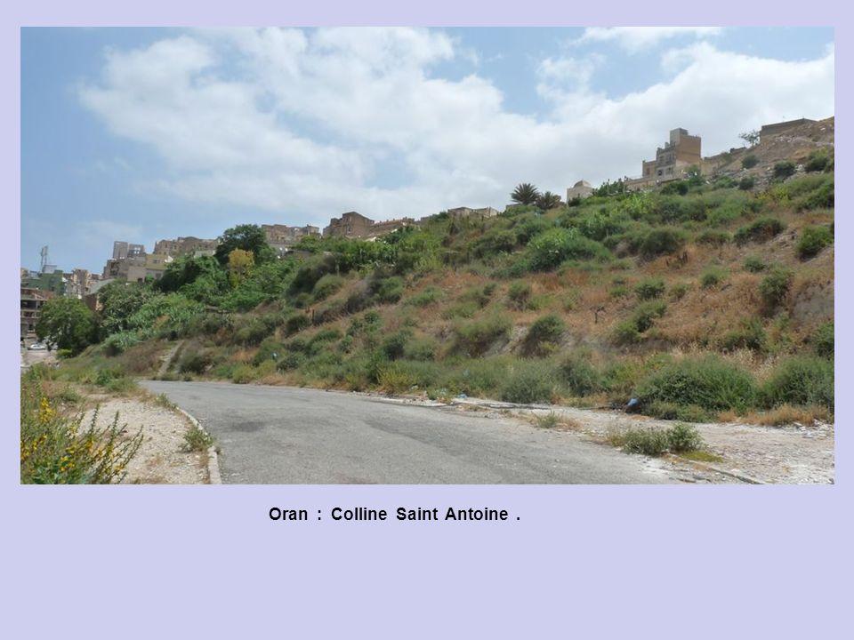 Oran : Colline Saint Antoine .