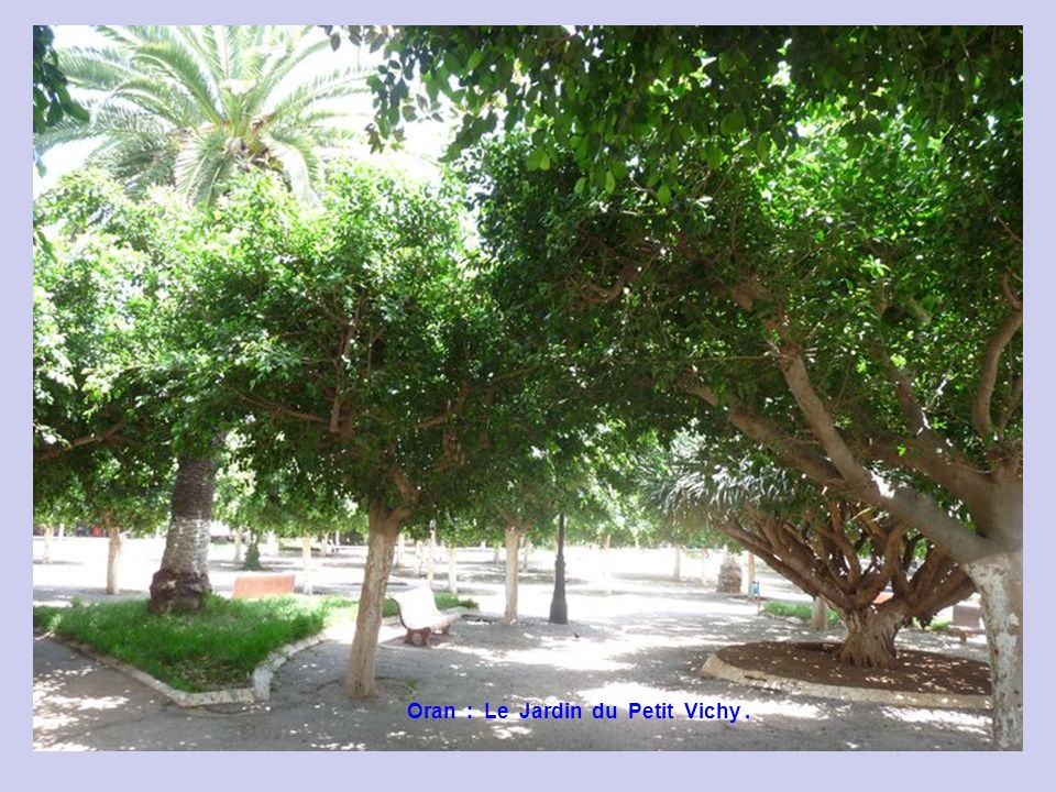 Oran : Le Jardin du Petit Vichy .