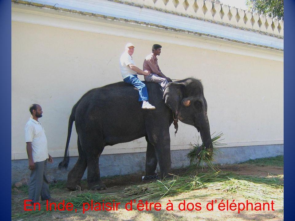En Inde, plaisir d'être à dos d'éléphant
