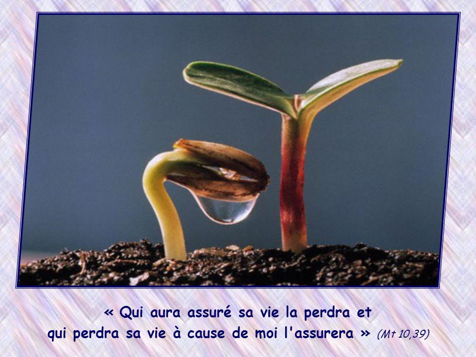 « Qui aura assuré sa vie la perdra et qui perdra sa vie à cause de moi l assurera » (Mt 10,39)