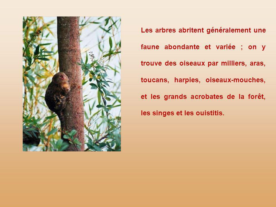 Les arbres abritent généralement une faune abondante et variée ; on y trouve des oiseaux par milliers, aras, toucans, harpies, oiseaux-mouches, et les grands acrobates de la forêt, les singes et les ouistitis.
