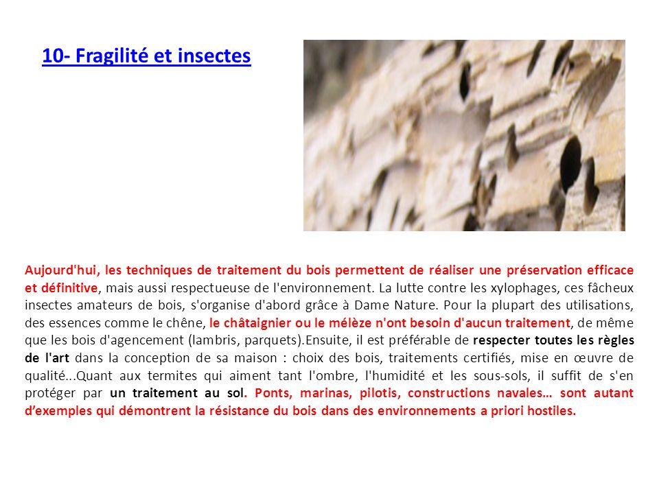 10- Fragilité et insectes