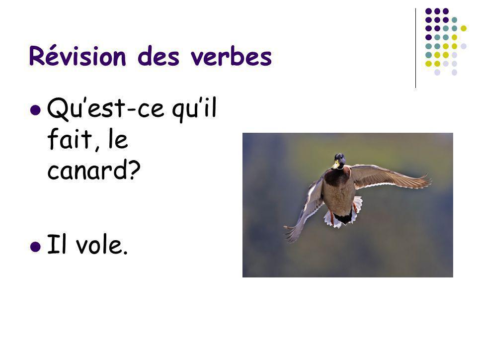 Révision des verbes Qu'est-ce qu'il fait, le canard Il vole.