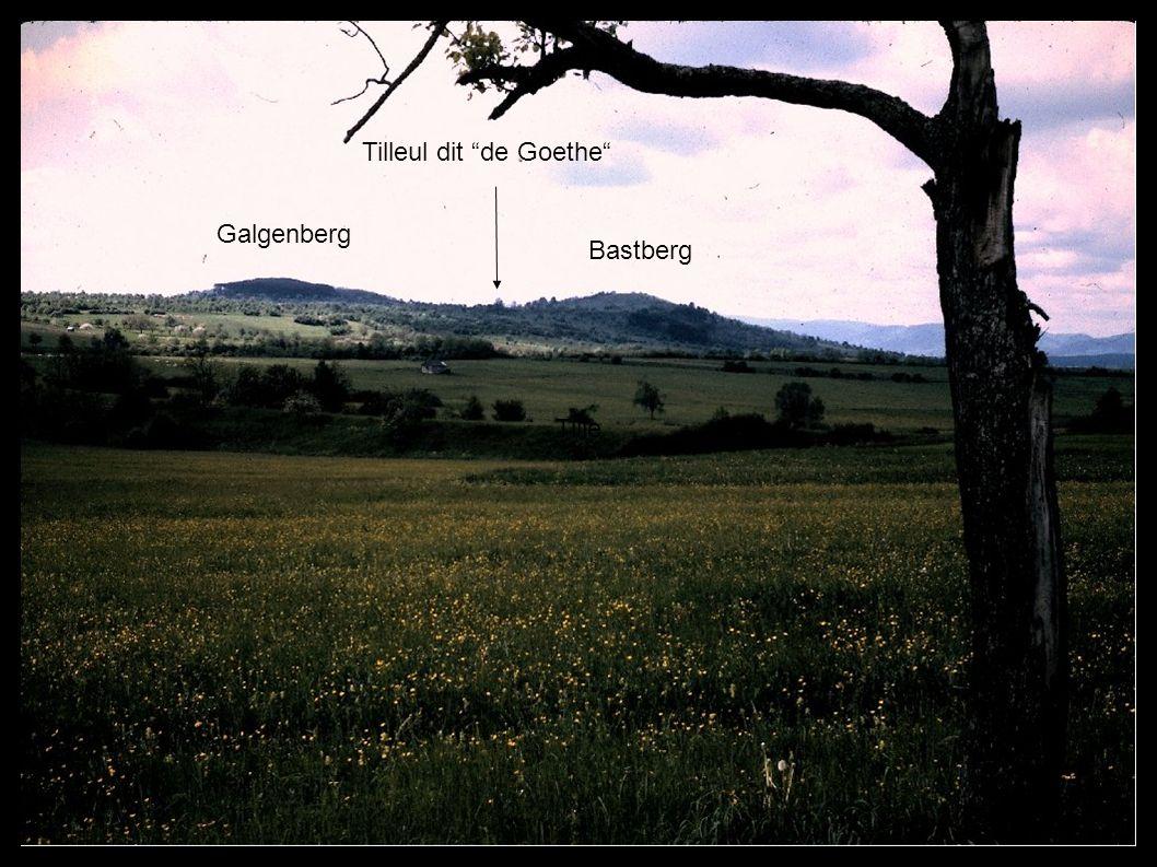 Tille Tilleul dit de Goethe Tilleul de Goethe Galgenberg Galgenberg Bastberg Bastberg