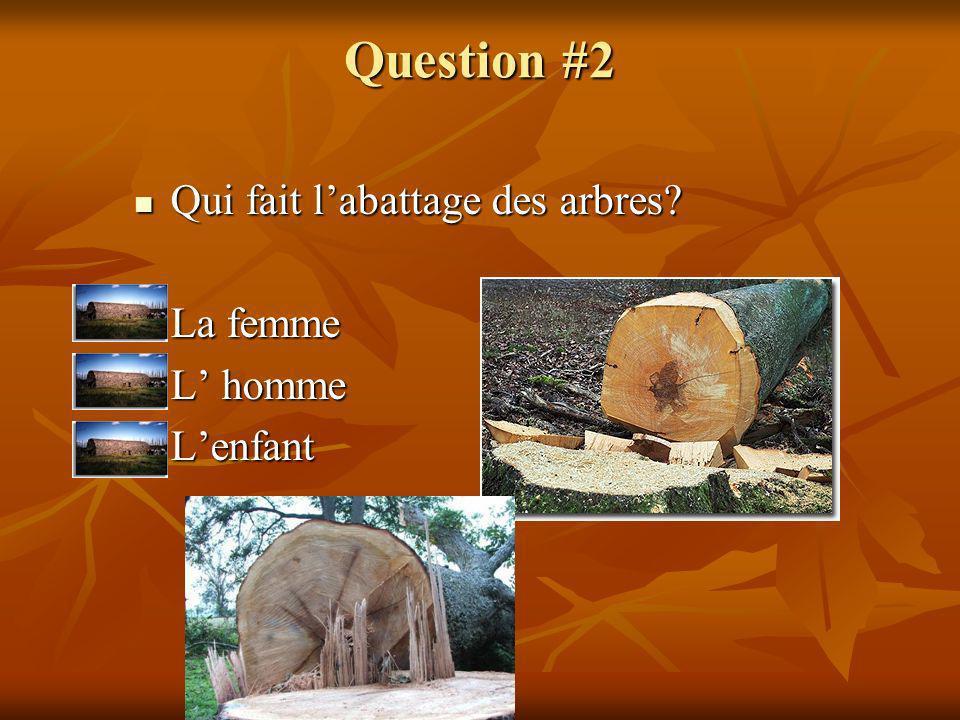 Question #2 Qui fait l'abattage des arbres La femme L' homme L'enfant