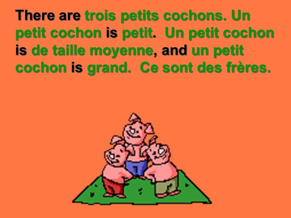There are trois petits cochons. Un petit cochon is petit