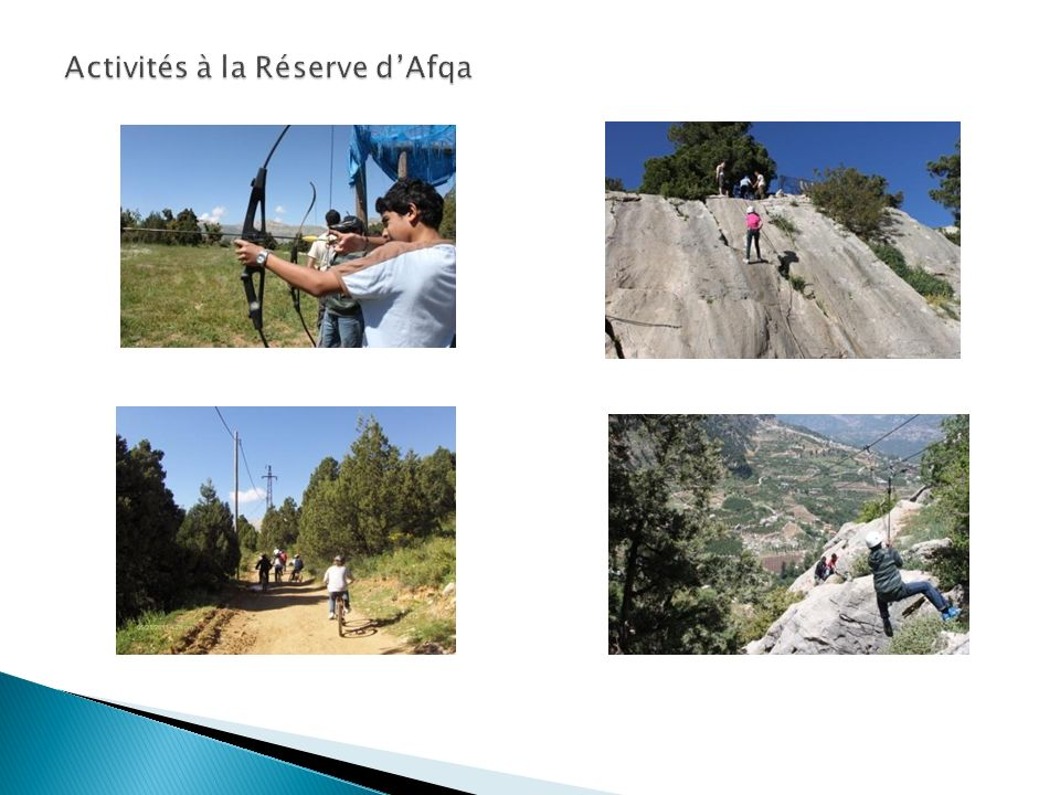 Activités à la Réserve d'Afqa