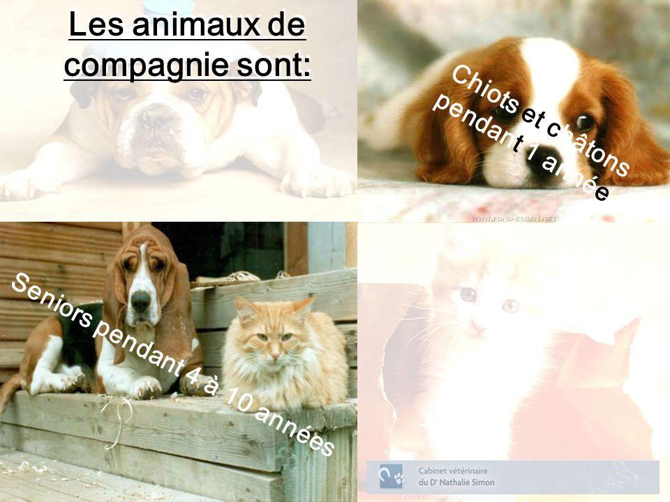 Les animaux de compagnie sont: