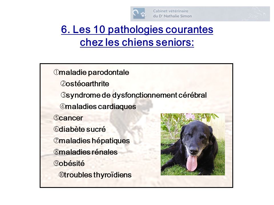 6. Les 10 pathologies courantes chez les chiens seniors: