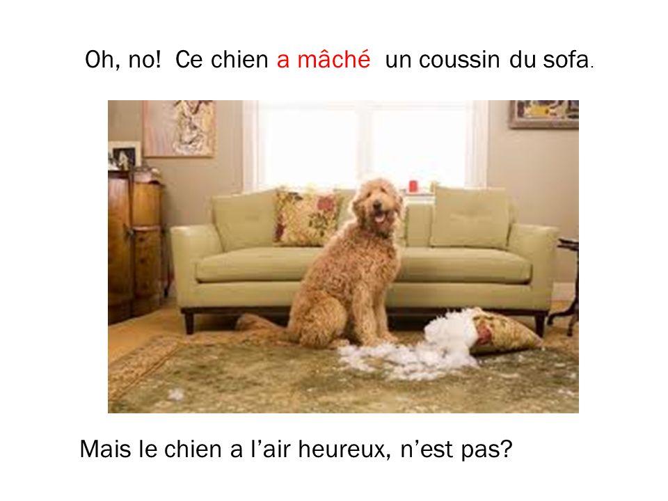 Oh, no! Ce chien a mâché un coussin du sofa.