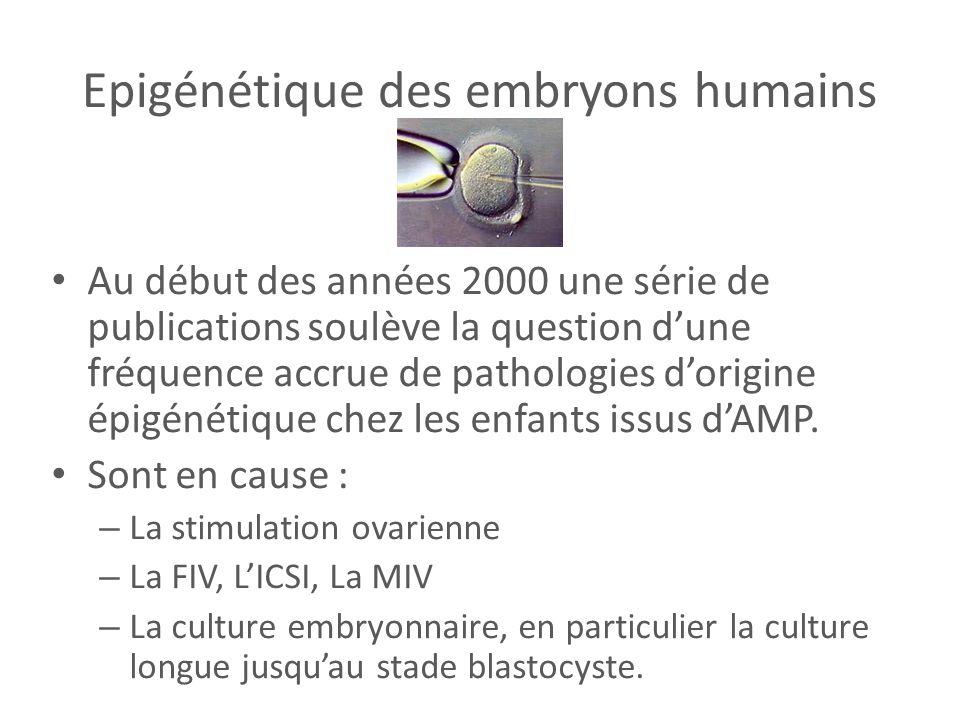 Epigénétique des embryons humains